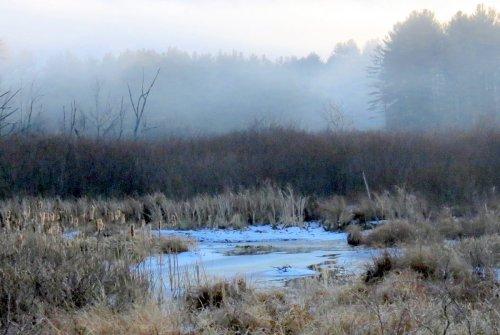 3. Misty Swamp