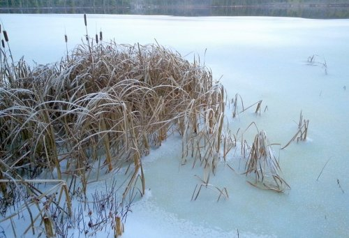 4. Pond Ice