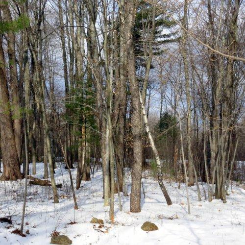 4. Snowy Woods