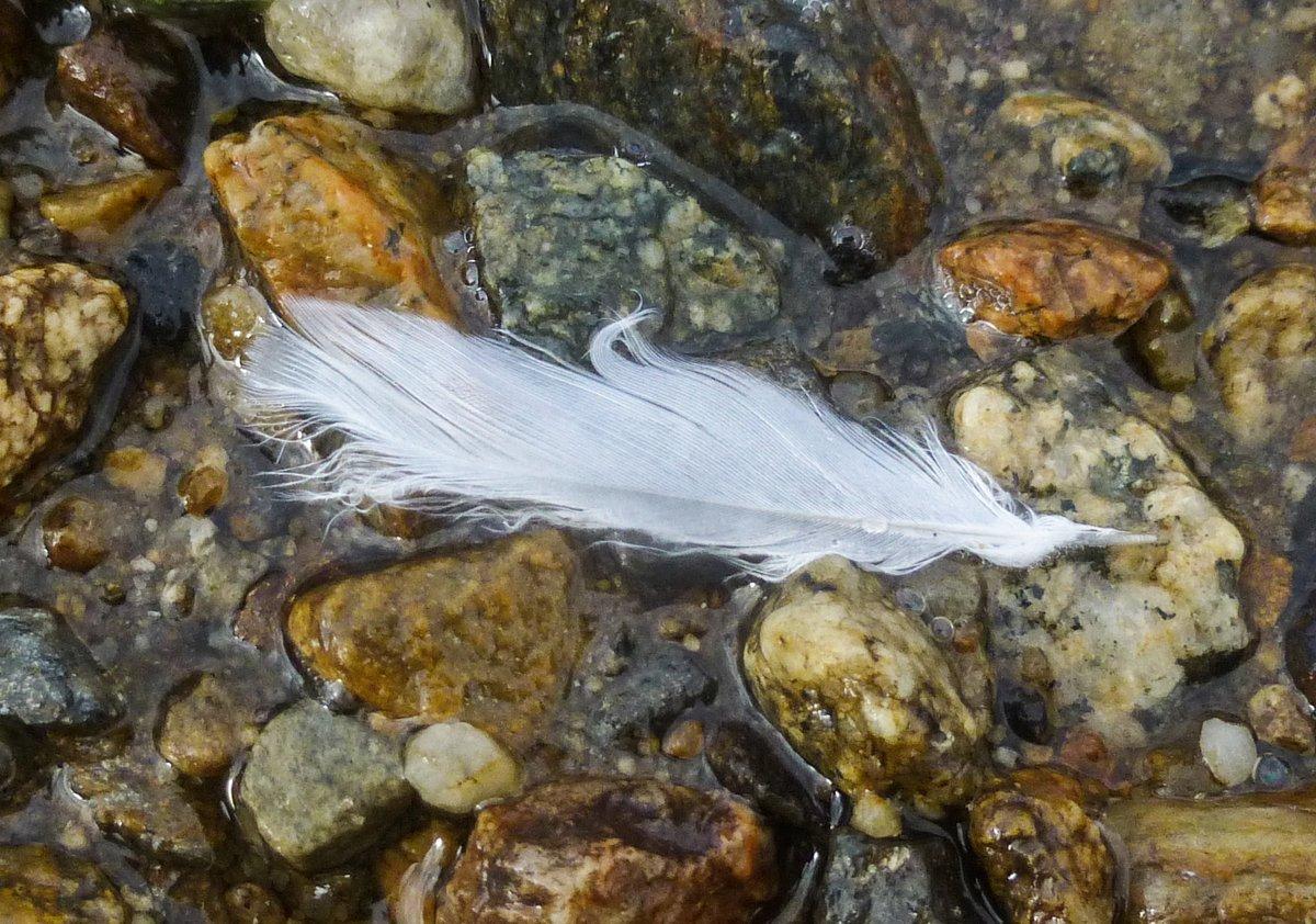 4. White Feather