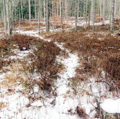 5. Deer Run