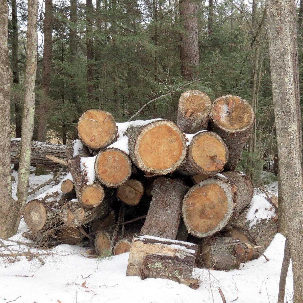 5. Log Pile