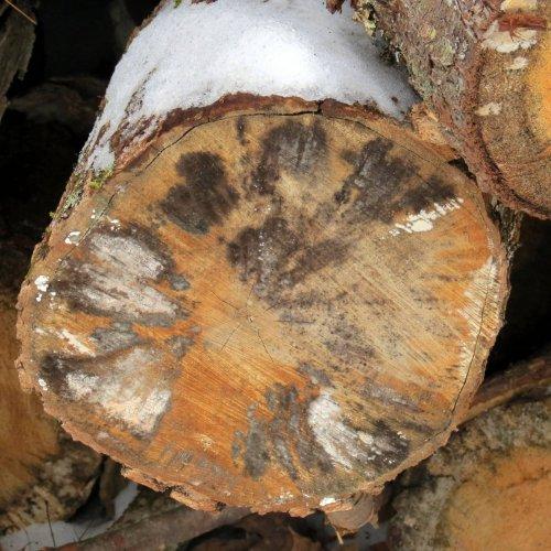 6. Log