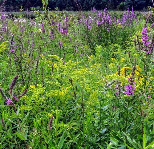 7. Meadow Flowers JULY