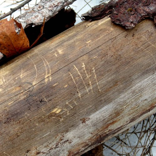 8. Claw Marks on Log