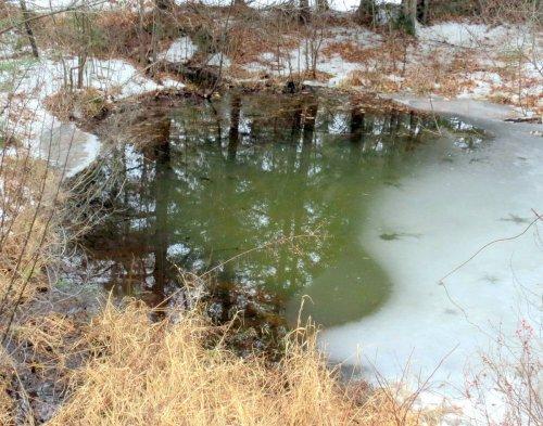 1. The Pond