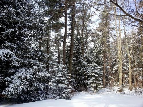 1. Winter Woods