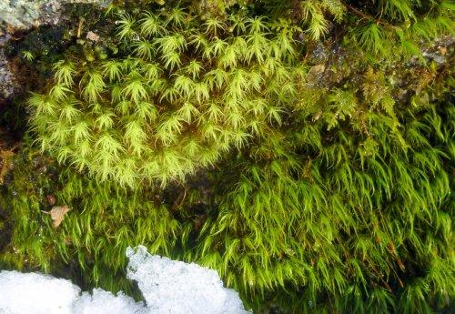 13. Apple and Broom Moss