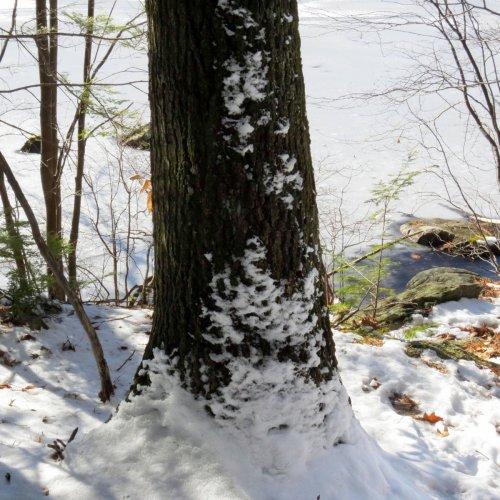14. Snowy Tree