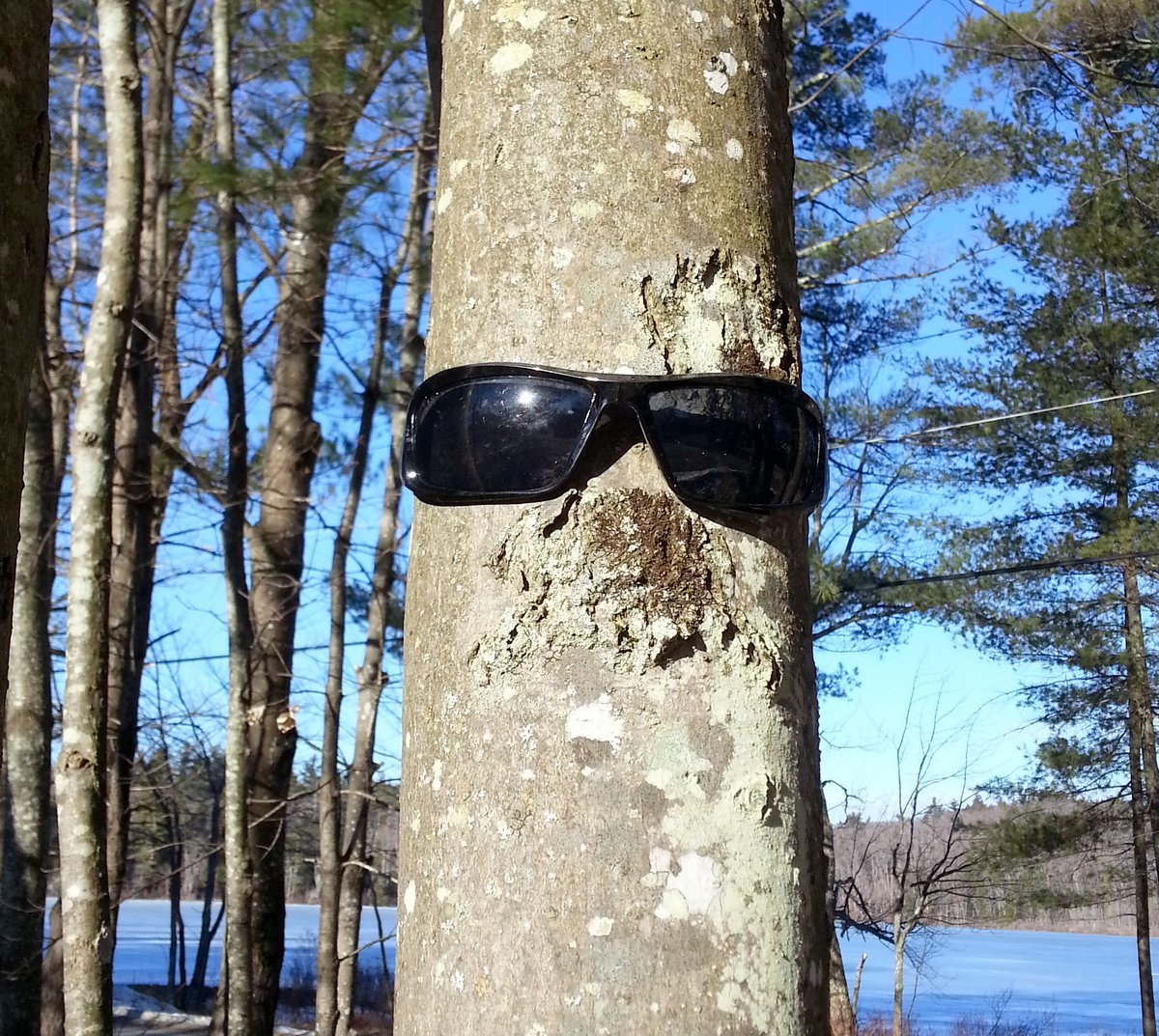 4. Maple with Sunglasses