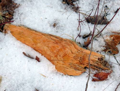 9. Orange Wood