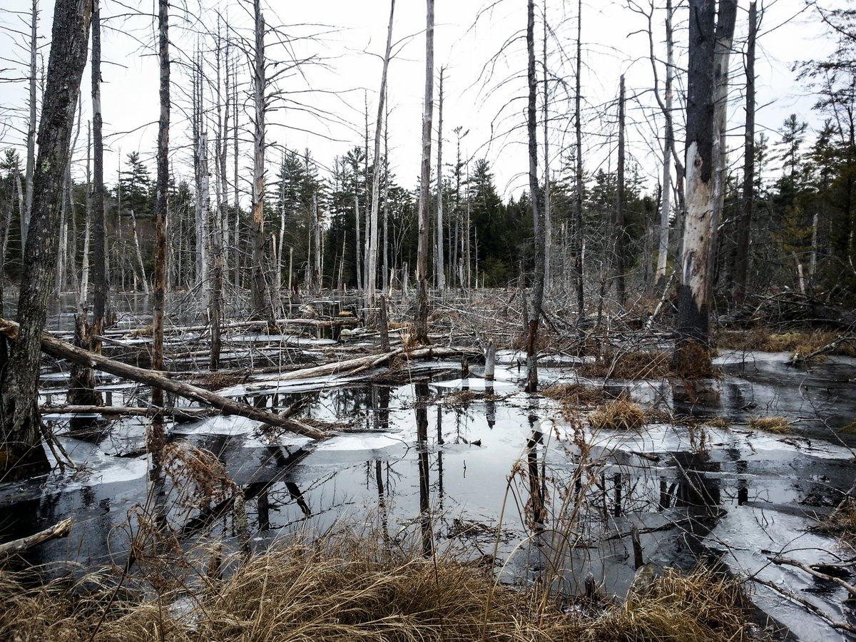10. Swamp