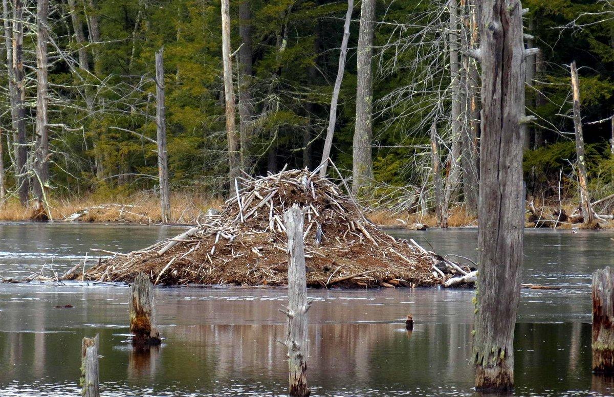 11. Beaver Lodge