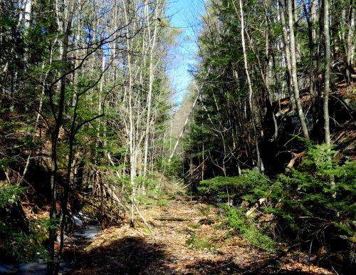11. Fallen Trees