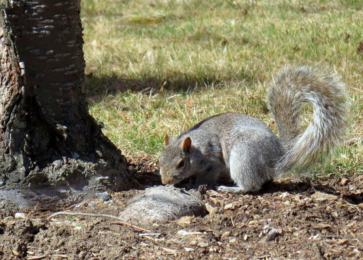 11. Squirrel