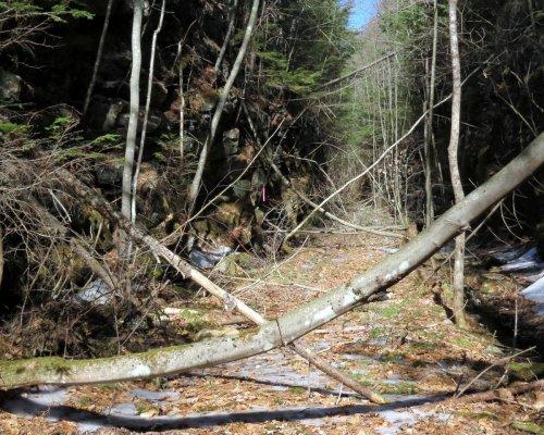12. Fallen Trees