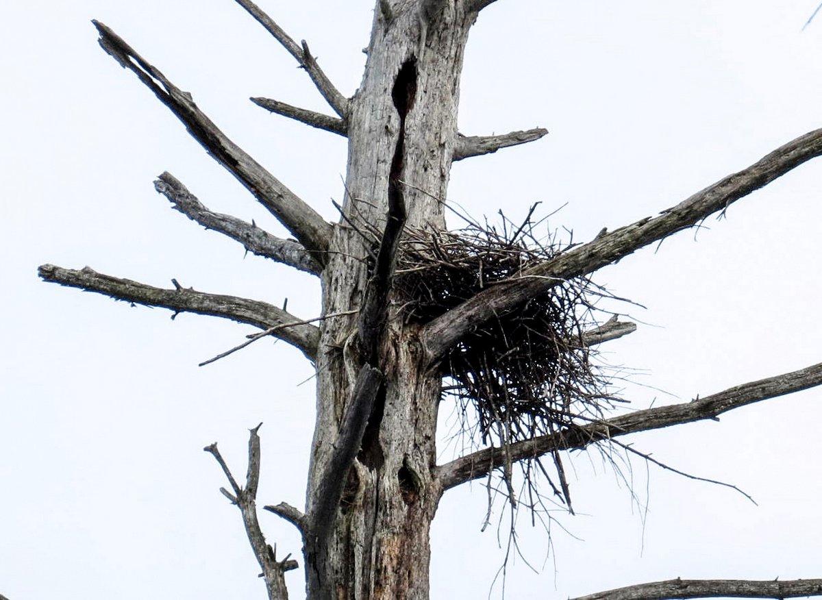 12. Heron Nest