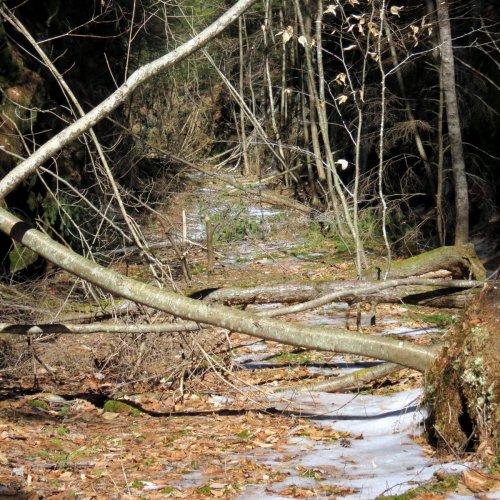 14. Fallen Trees
