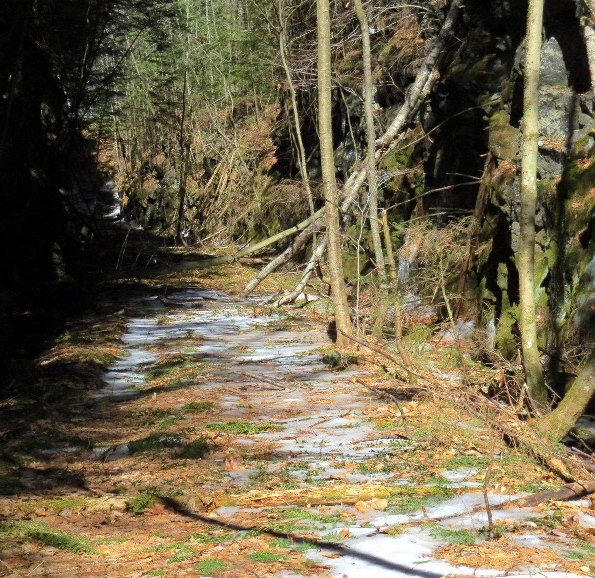 17. Fallen Trees