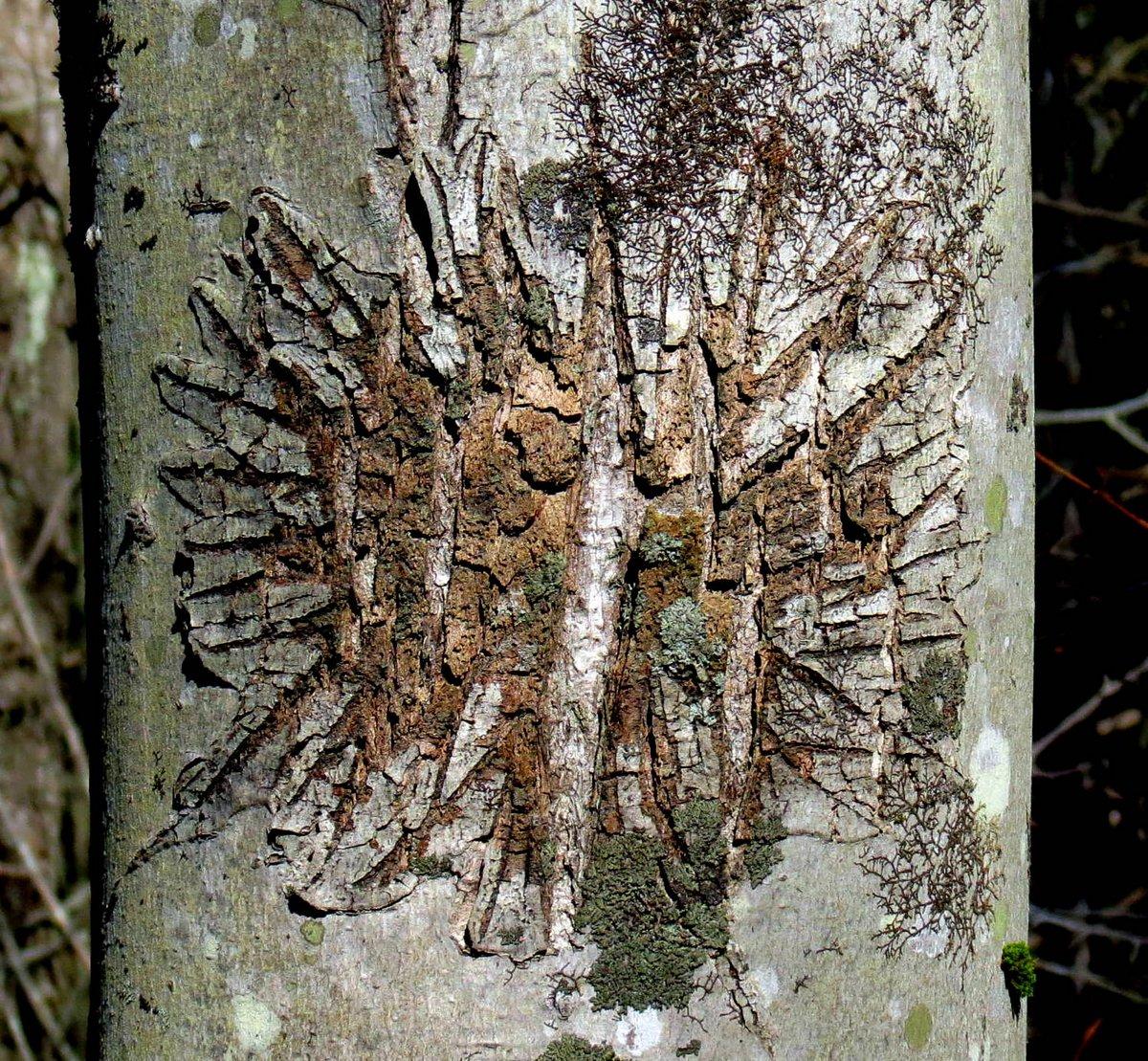 6. Maple Scae