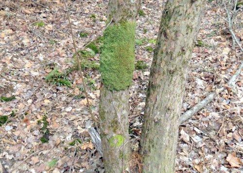 12. Tree Skirt Moss