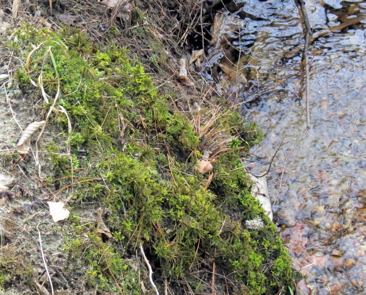 19. Tree Moss