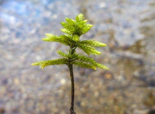 20. Tree Moss