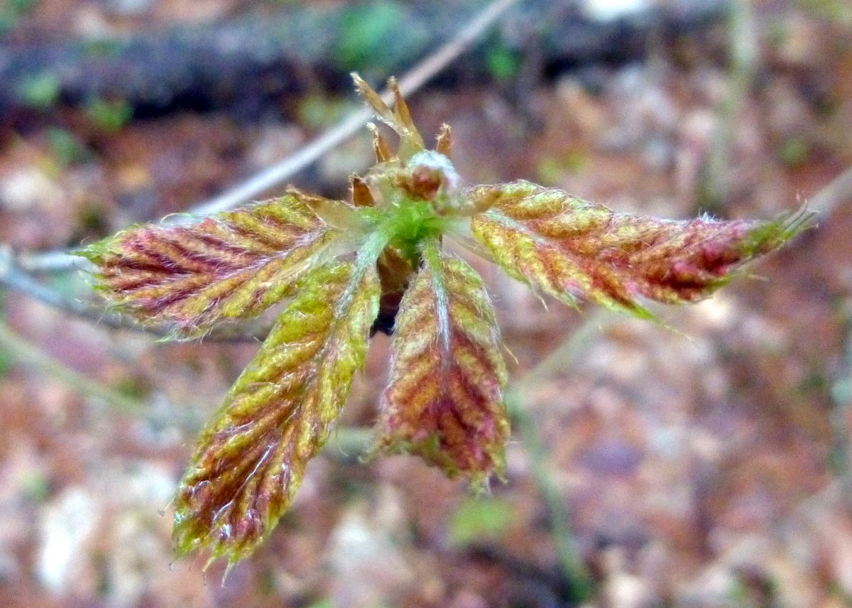 14. New Oak Leaves