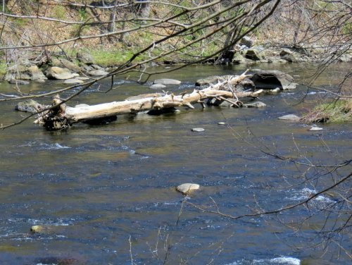 16. Pine Tree in River