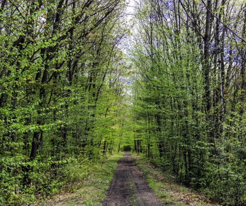 18. Trail