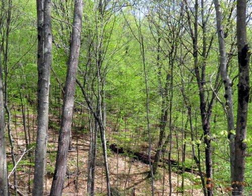 2. Woods
