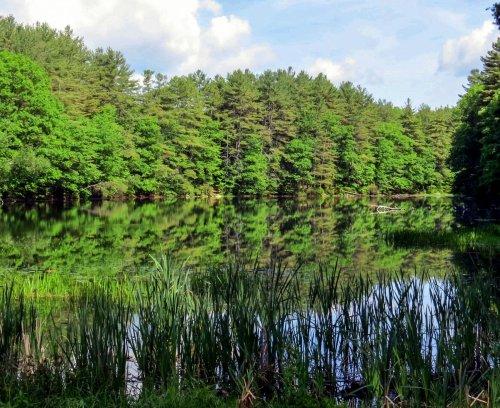 1. Pond