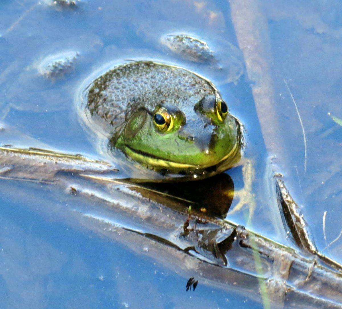 12. Frog