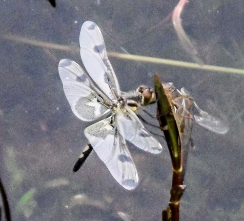 13. Dragonfly
