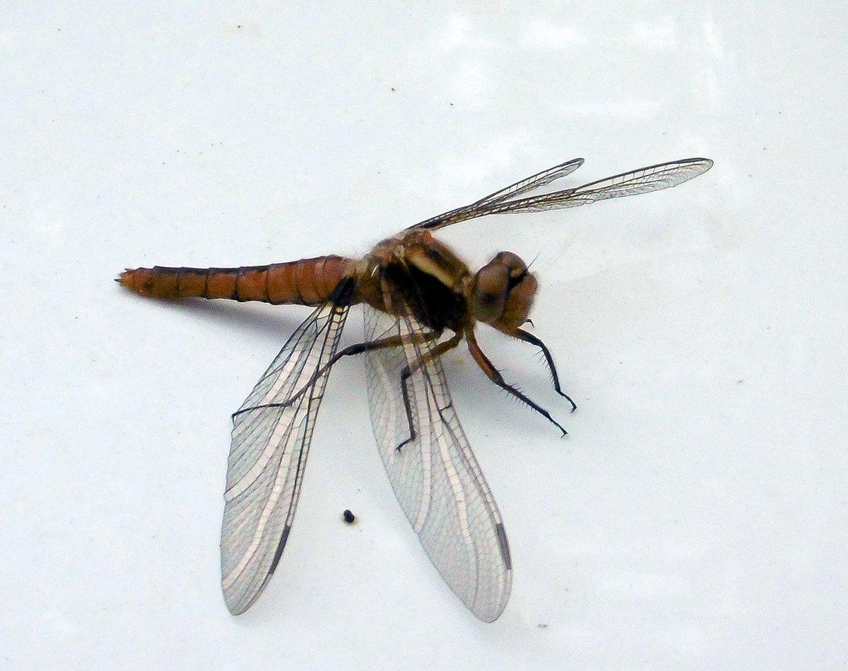 14. Dragonfly