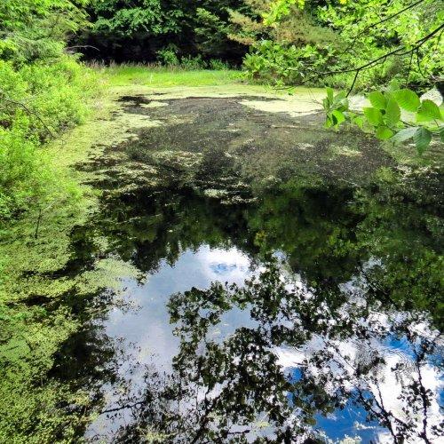 14. Pond