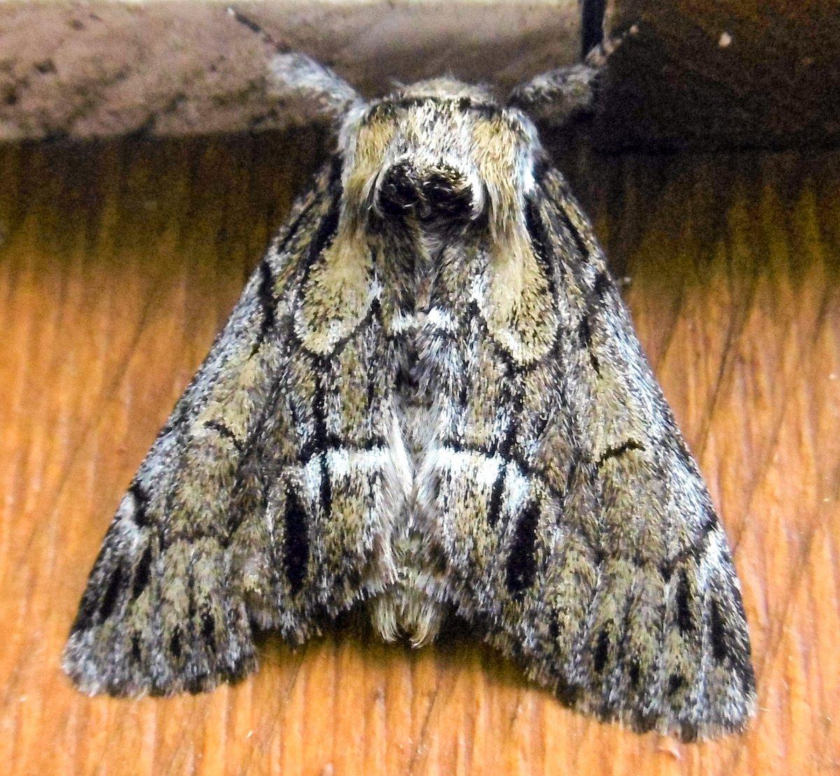 16. Moth