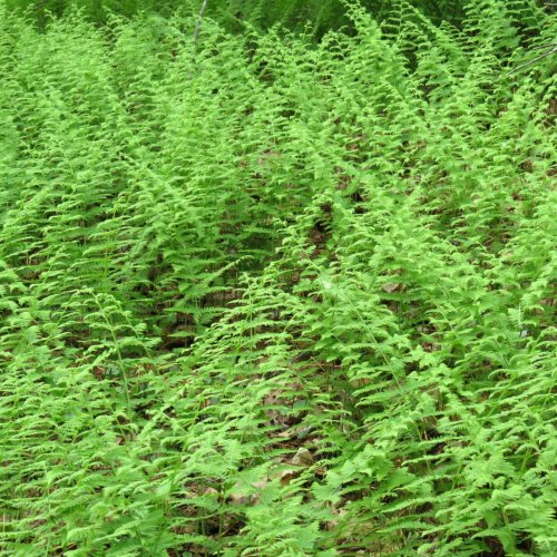 19. Fern Patterns