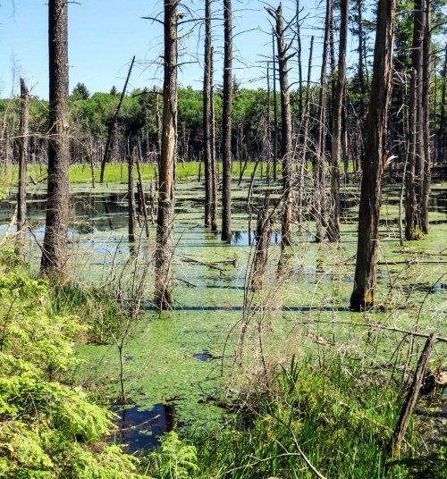 23. Swamp