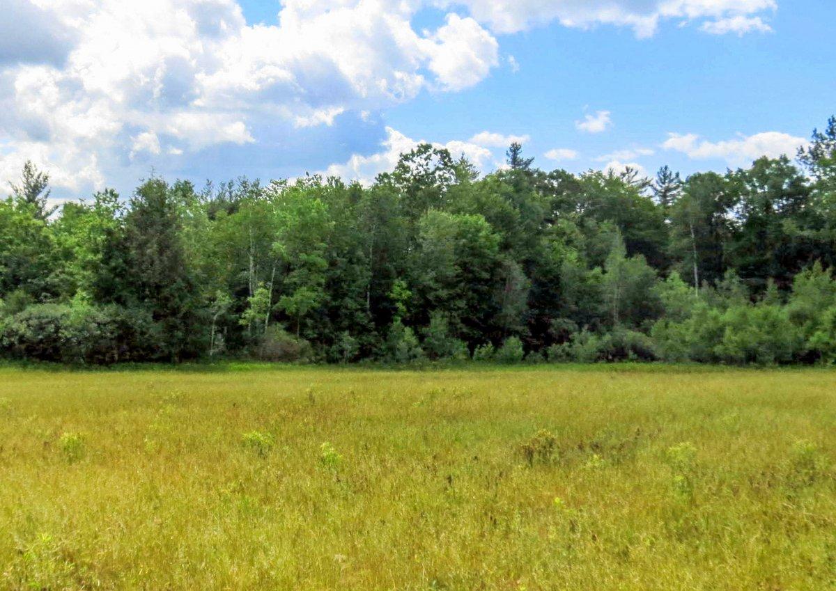 3. Meadow