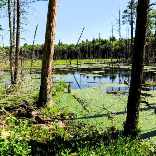 5. Swamp