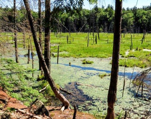 7. Beaver Trail
