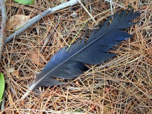 12. Feather