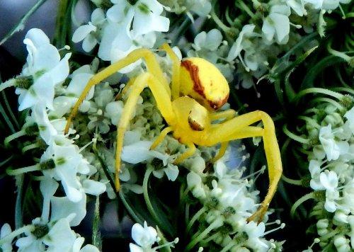 3. Crab Spider