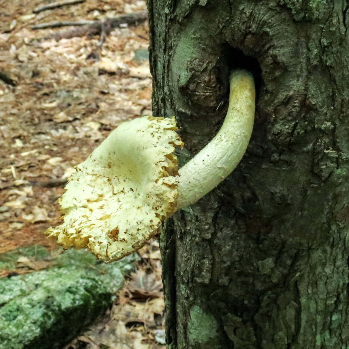 3. Mushroom on Tree