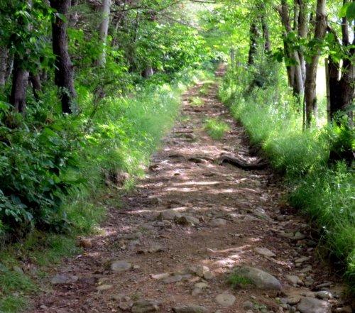7. Trail
