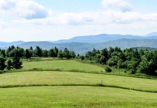 8. Meadow