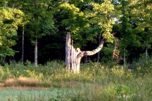 1. Old Tree
