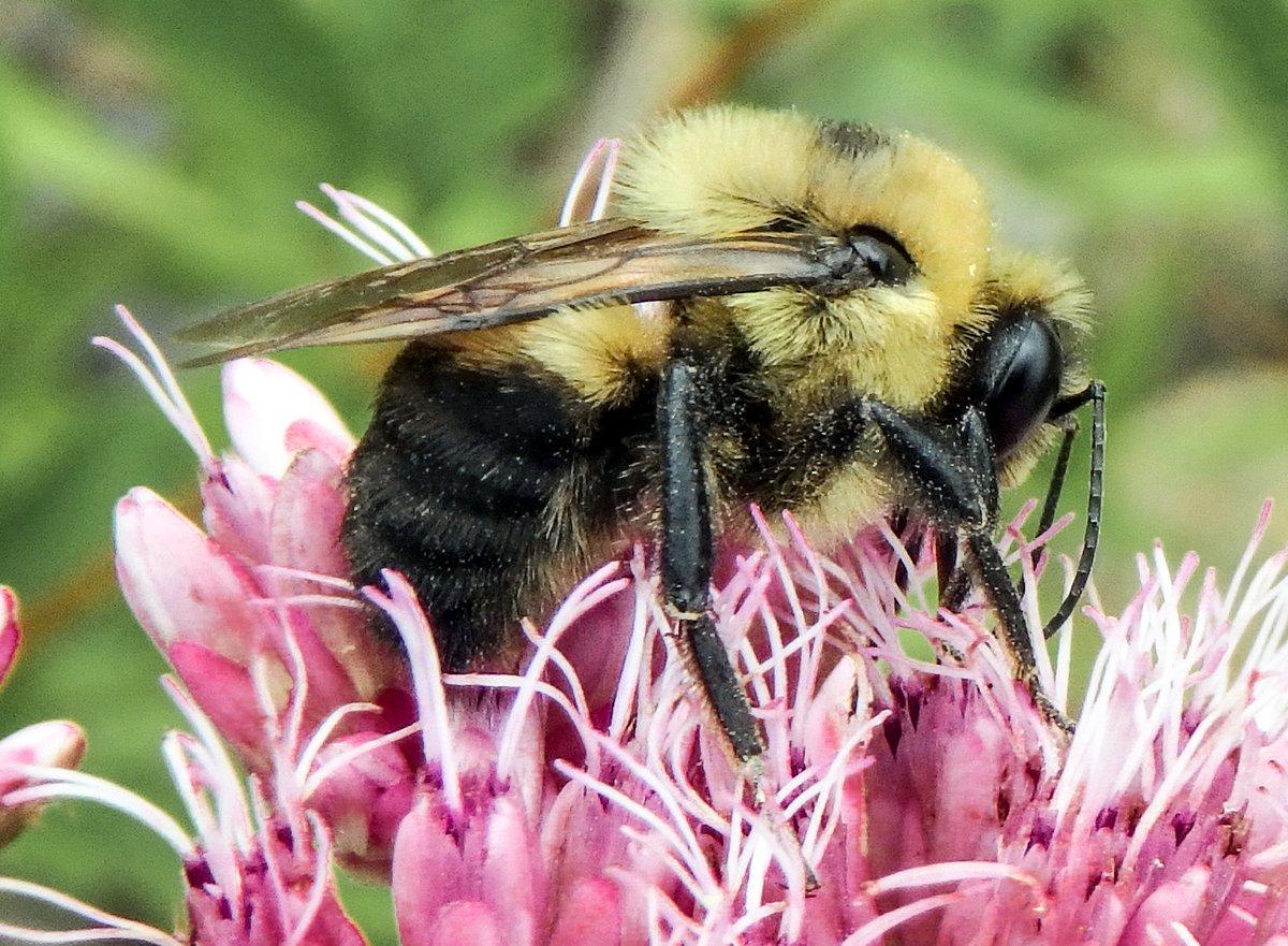 10. Bumblebee