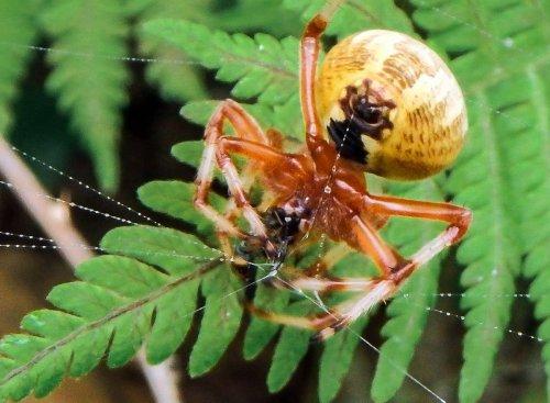 11. Spider